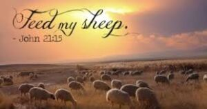 Feed My Sheep - John 21