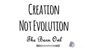Proof Of Creation: 'The Barn Owl'