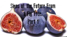 Signs of the future from a fig tree Part 1  Video Post