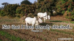 "Thought for April 9th. ""NOT THAT I HAVE ALREADY OBTAINED … """