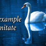 "Thought for May 21st. ""AN EXAMPLE TO IMITATE"""