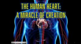 The Human Heart: A miracle of creation